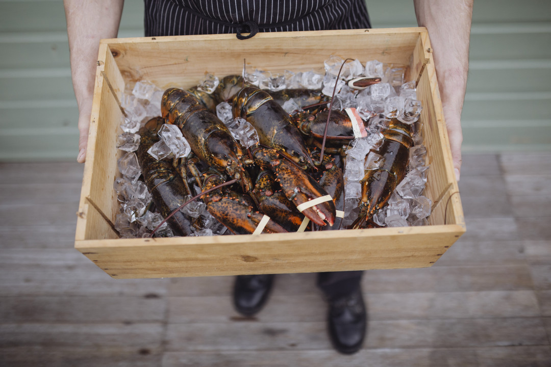 A box of lobsters on ice